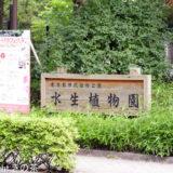 6月の花菖蒲がおすすめ!深大寺の水生植物園を見てきました