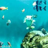 葛西臨海公園は、水族園や観覧車、BBQもできて1日楽しめるスポット!デートや家族で過ごすのにおすすめです